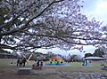 Tokushima4